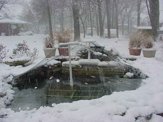 Backyard Pond Fish In Winter : koi ponds  the pond in a winter snow storm
